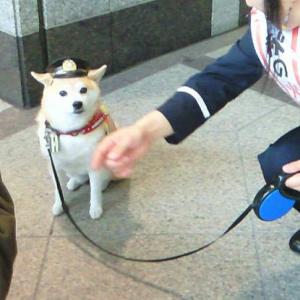 消防団犬ココ