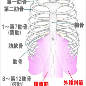 左第八肋骨骨挫傷