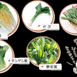白菜の仲間の野菜