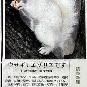 白いエゾリス