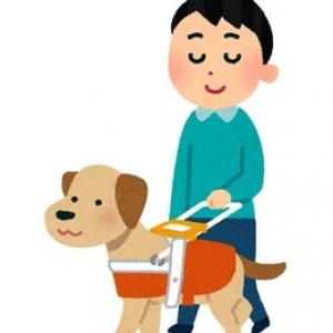 盲導犬を蹴る動画