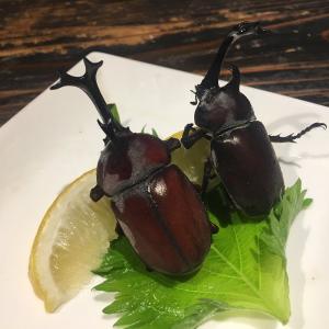 食用カブトムシ